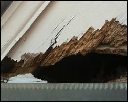 Squirrel damage in Burke VA
