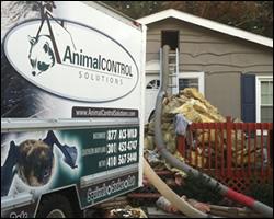 Virginia Attic Cleanout, Insulation Replacement